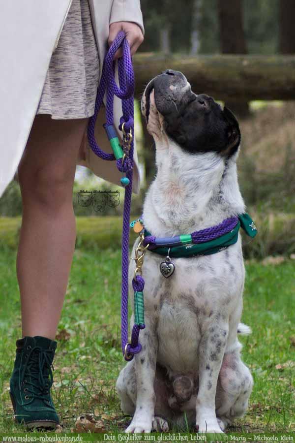 Hund Kingston himmelt Frauchen an