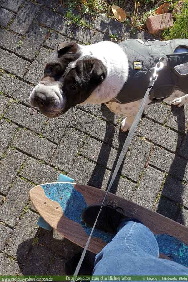 Mit Hund Longboard fahren