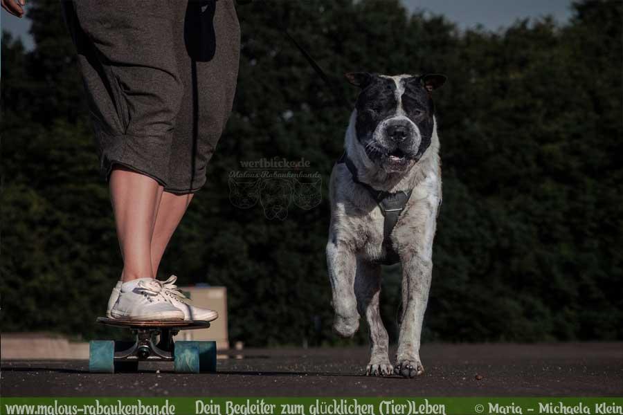 Rennender Hund neben Longboard