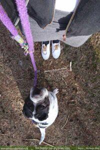 Spazieren mit Buerohund