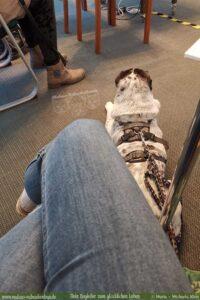 Bürohund mit bei Präsentation