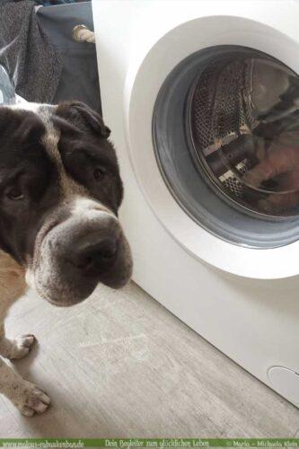 Hund vor Waschmaschine mit Kuscheltier