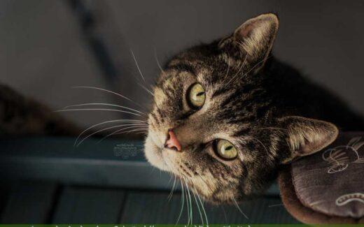 Katze auf Schrank