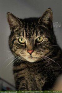 Katzen Portrait drinnen