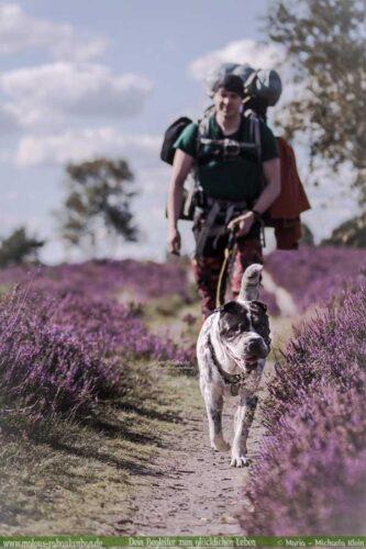 Mann wandert mit Hund in der Lüneburger Heide