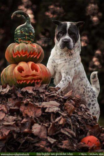 Halloweenbild mit Hund/Shar Pei