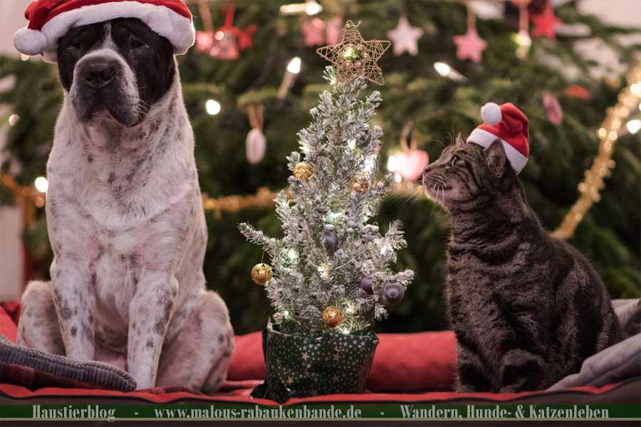Hund und Katze mit Weihnachtsmütze