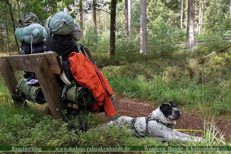 Hund mit Fernwanderrucksäcken