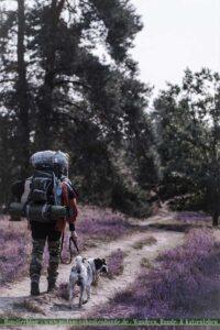 Shar Pei wandert mit Wanderer durch die Heideblüte