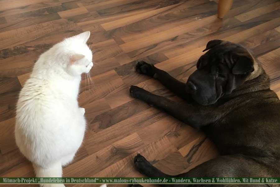 Shar Pei und Katze liegen nebeneinander