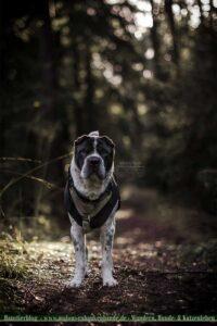 Hund beim Wandern im Wald