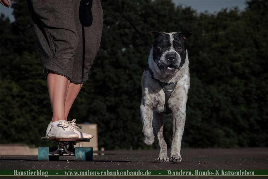 Hund rennt neben Longboard