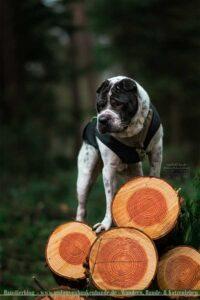 Hund auf einem Holzstapel