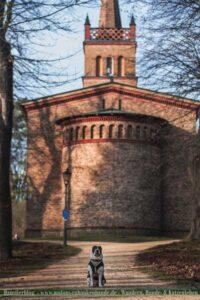 Hund in Glindow vor Kirche