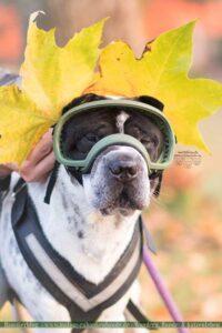 Hund mit Blätter als Ohren und Brille
