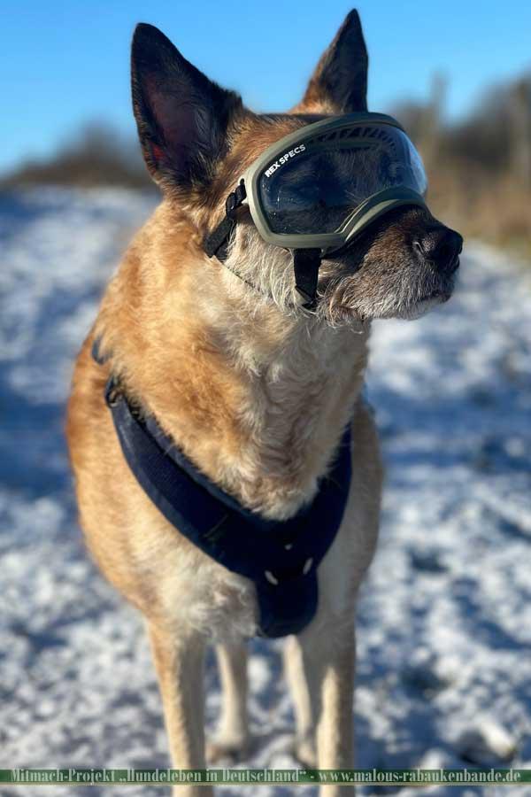 Emma Lotte mit Brille im Schnee