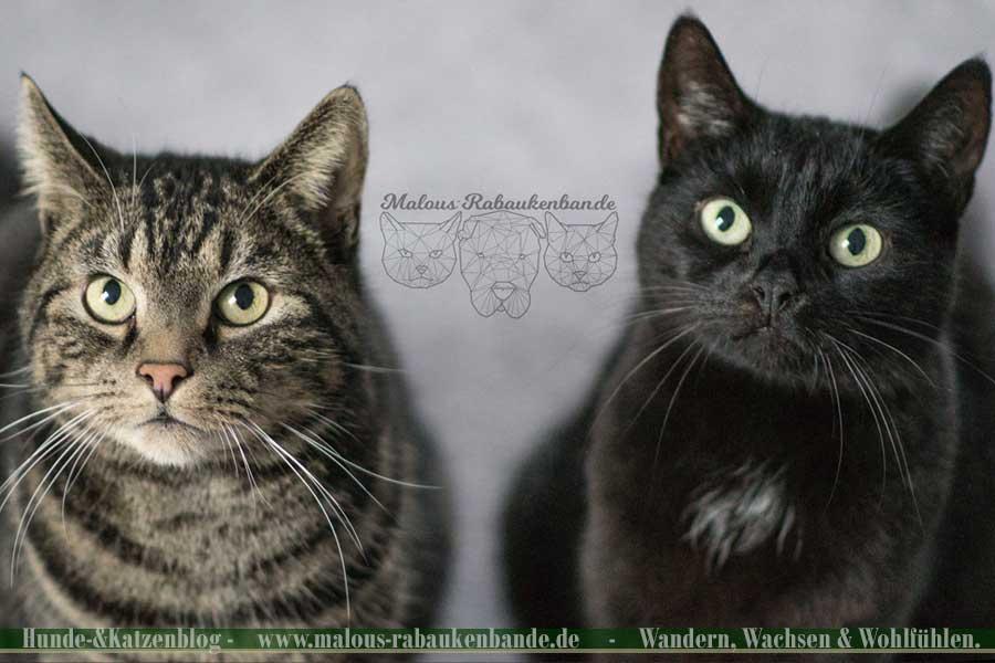 Kater und Katze schauen in die Kamera