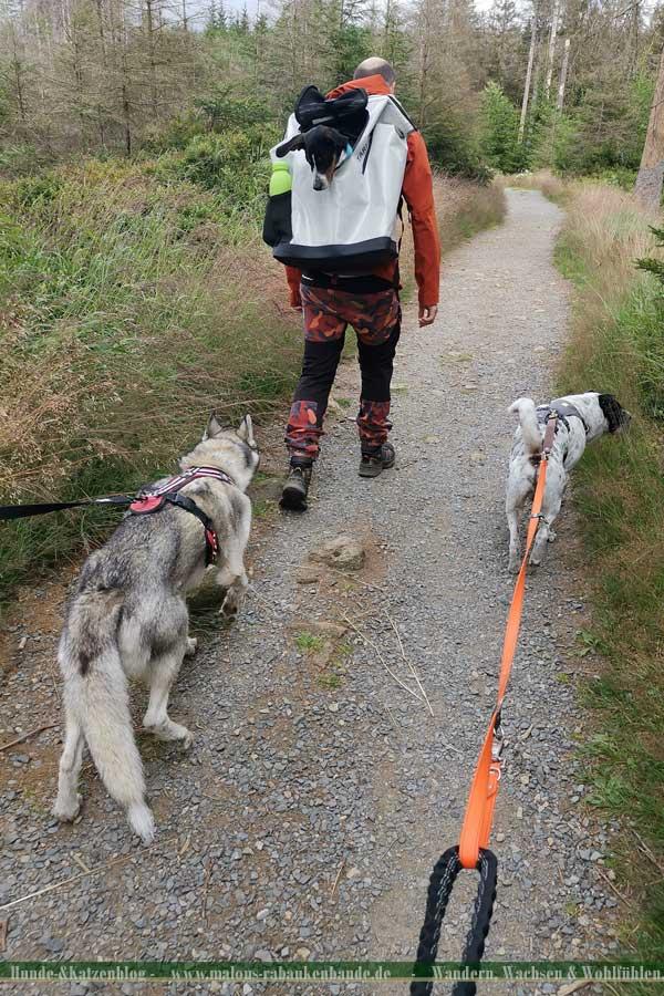 Husky, Shar Pei und Basset-Dackel-Mix wandern im Harz