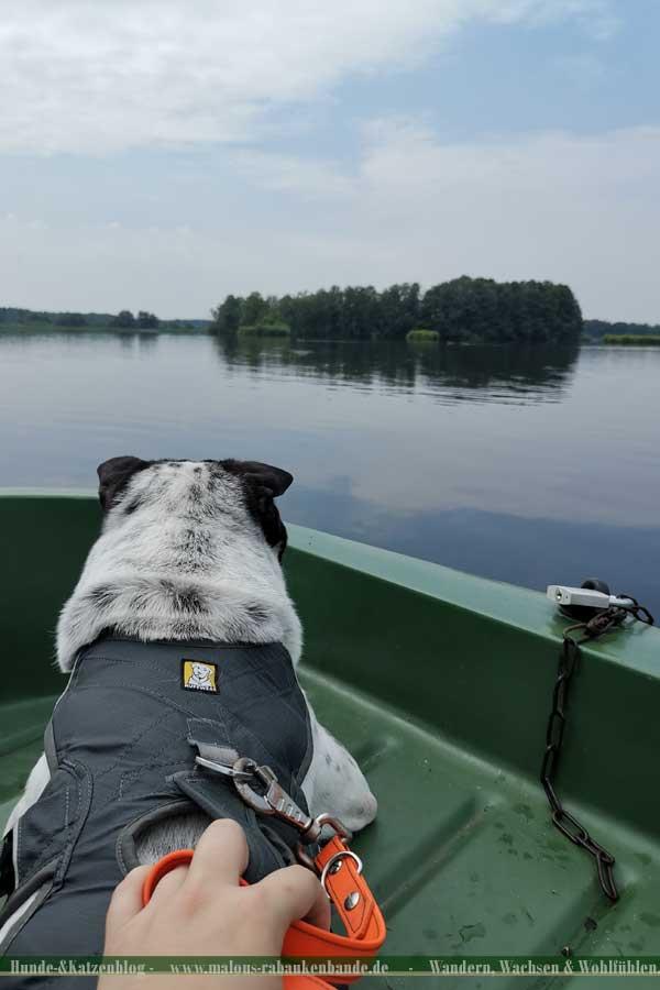 Shar Pei/Hund im Tretboot auf See