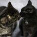 Soziale Tiere - Mehrkatzenhaltung lohnt sich
