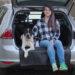Sicherheit im Auto (mit Hunden)