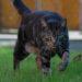 Freiheit oder Sicherheit - Dilemma der Katzenhalter