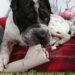 Rabaukenbande Hunde Katzen Blog Tiere Shar Pei Freizeit Arbeit Buero , DIY Do it yourself basteln Klopapierrolle Haushaltsrolle Intelligenz Spielzeug Beschaeftigung Auslastung