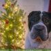 Weihnachtsgeschenke - für Hund & Halter + Verlosung [Werbung]