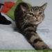 4 Gründe gegen eine Katze - was dir meist nicht gesagt wird